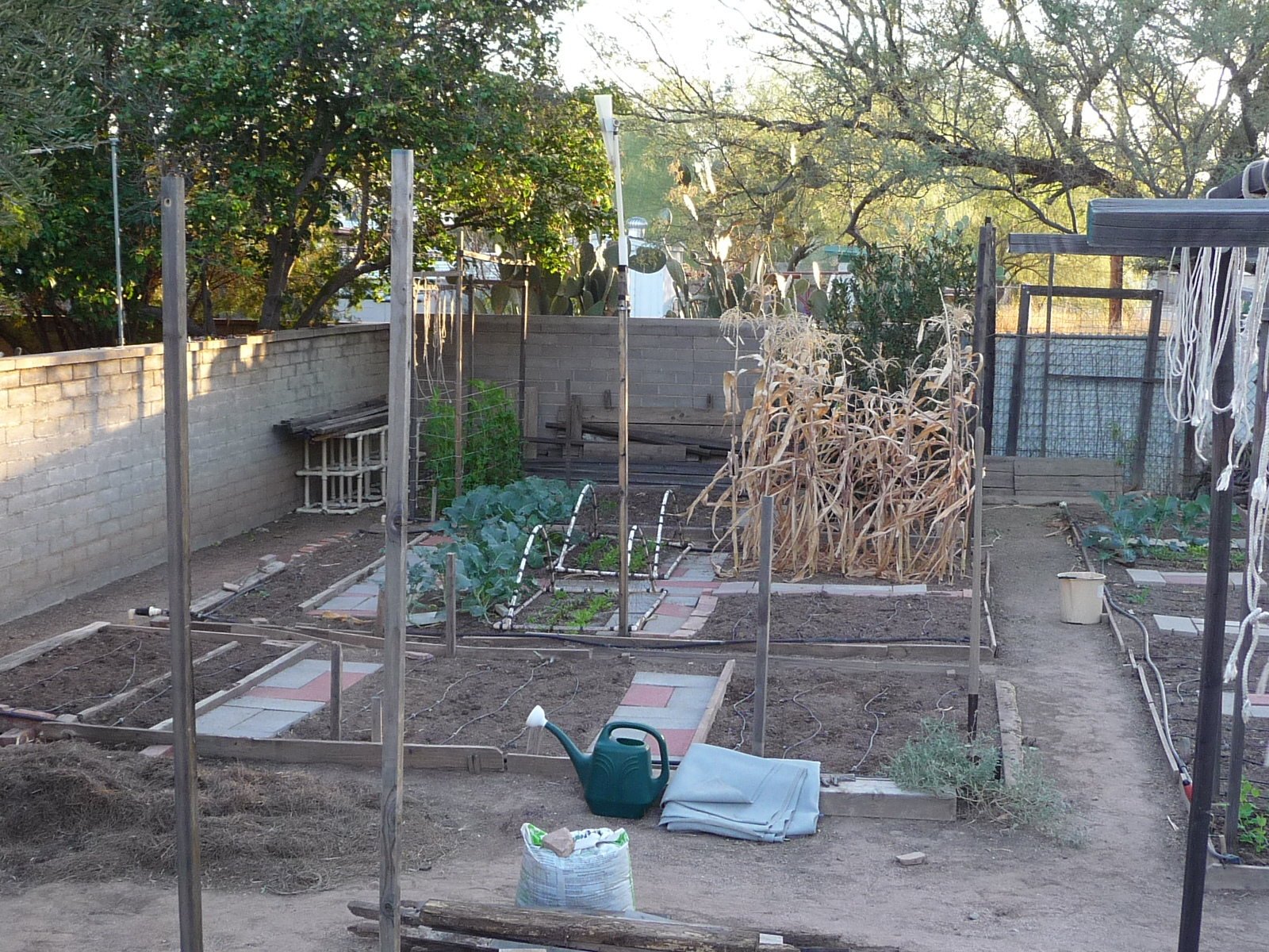 2008 winter vegetable garden